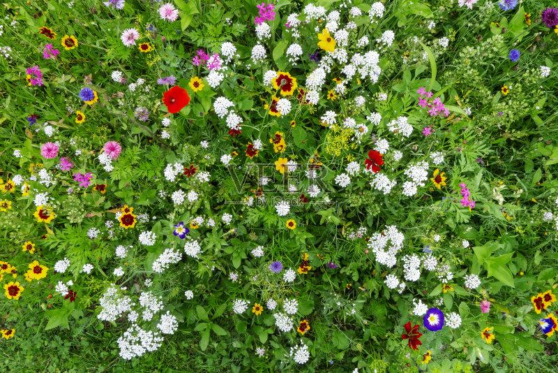 花草-大量物体 植物学 白色 绿色 美 植物 花头 红色 夏天 蓝色 黄色 草地