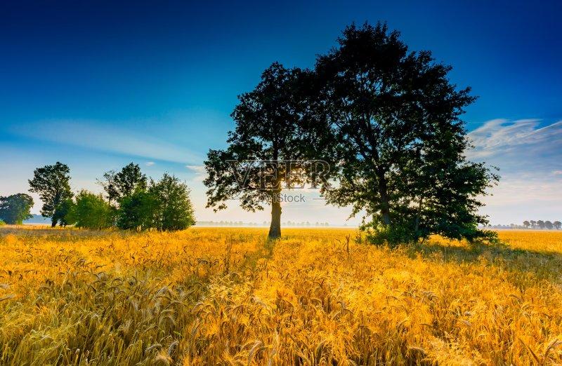 麦田-照亮 谷类 生长 田园风光 日落 农场 夏天 自然 黄色 玉米 黄昏 食品