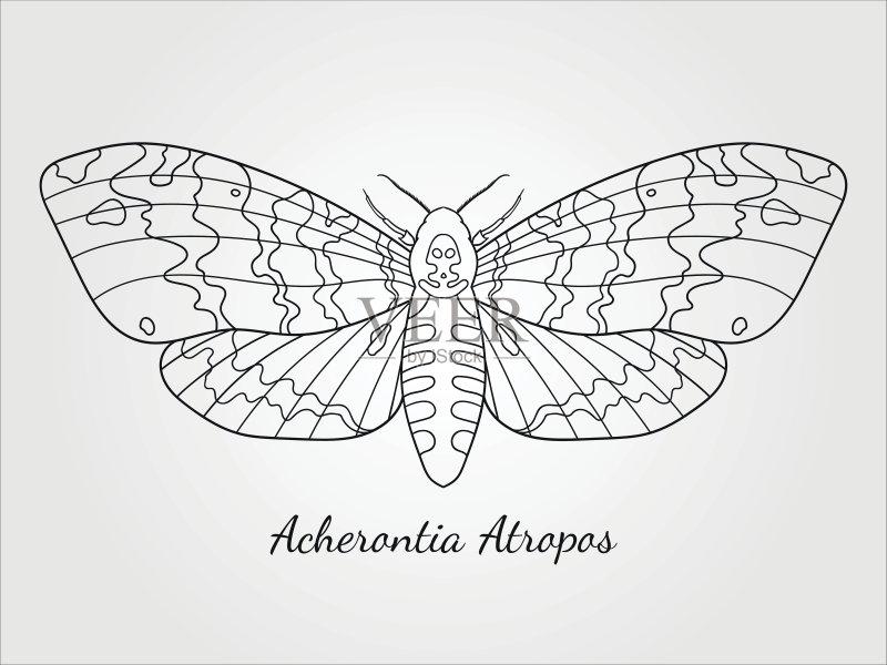 铅笔画 着色 设计 白色 卡通 超自然 符号 式样 昆虫 白色背景 纹身 死的