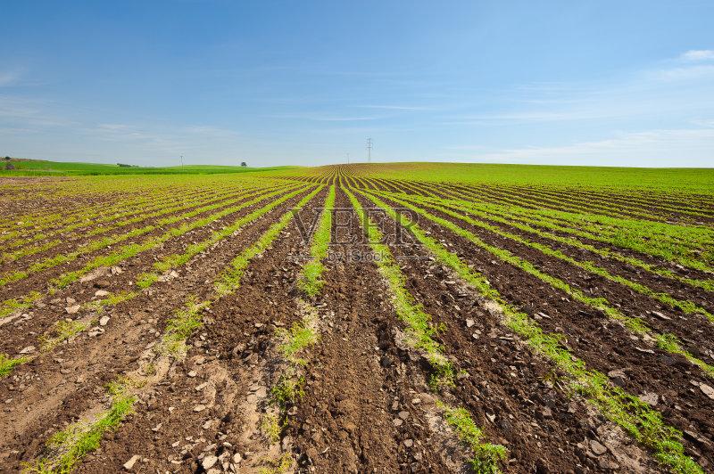 季节 户外 田地 已经垦殖的土地 种子 田园风光 耕地 牧场 沙漠 农场
