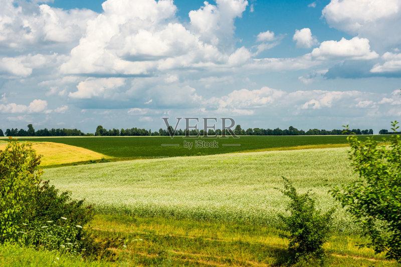 田野-乌克兰 田园风光 农场 蓝色 夏天 自然 黄色 无人 2015年 草 多色的