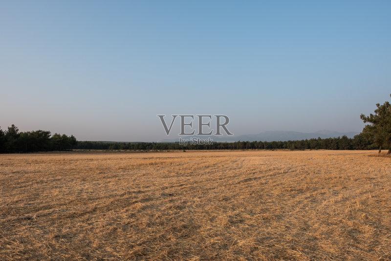 形 色彩鲜艳 田地 已经垦殖的土地 绿色 种子 田园风光 橙色 农场