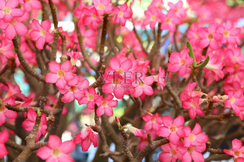夏天 自然 花卉商 爱 粉色 黑斑羚 清新 树 多色的