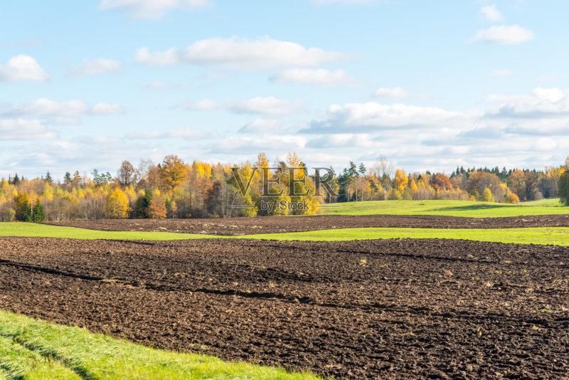 田野-巨大的 草地 陆地 森林 生长 植物学 环境 叶子 寂寞 春天 夏天 自然