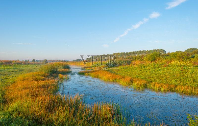 宁静 水 风景 湿地图片