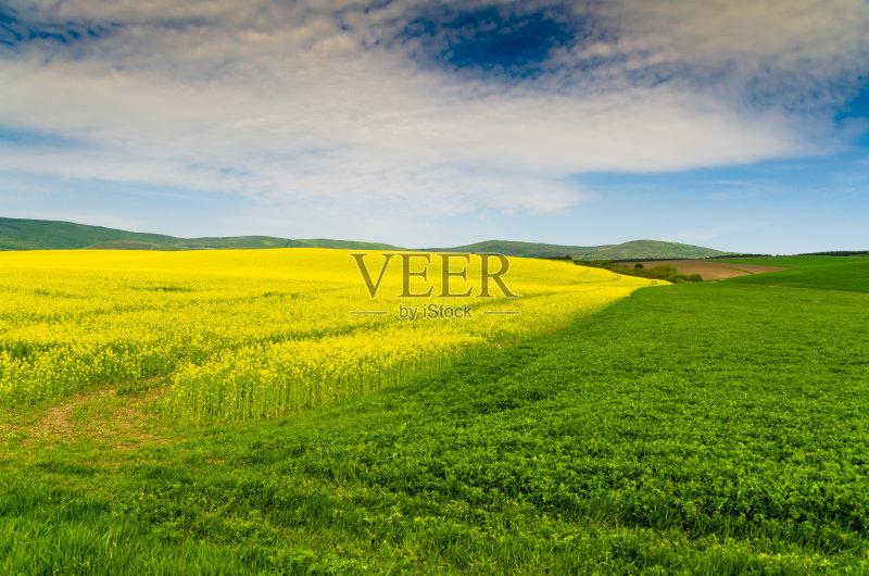 田野-草地 生长 环境 植物 捷克共和国 天空 太阳 石油 自然 景观设计 黄
