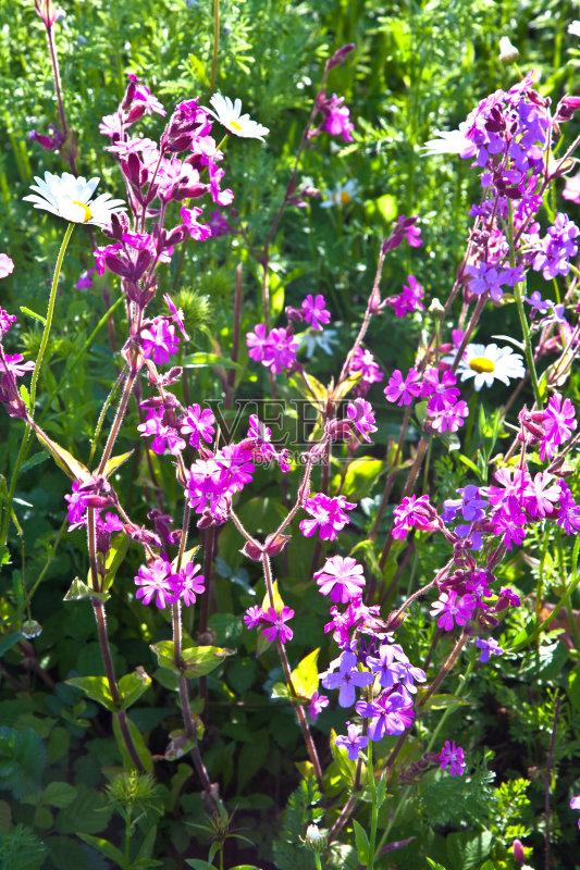 花草-草地 自然美 生长 田园风光 美 晴朗 明亮 植物 光 春天 自然 日光