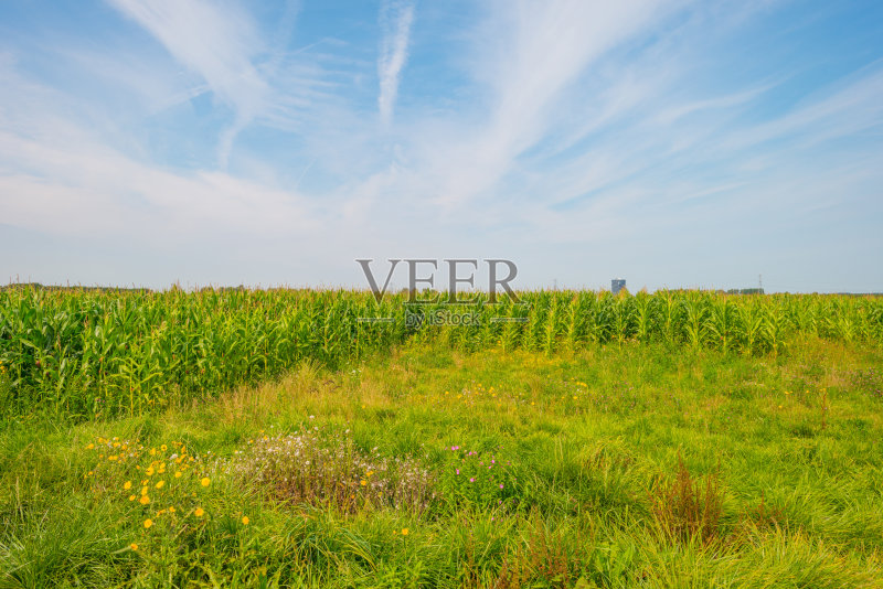 田野-田地 黎明 田园风光 蔬菜 晴朗 商业金融和工业 天空 夏天 蓝色 自