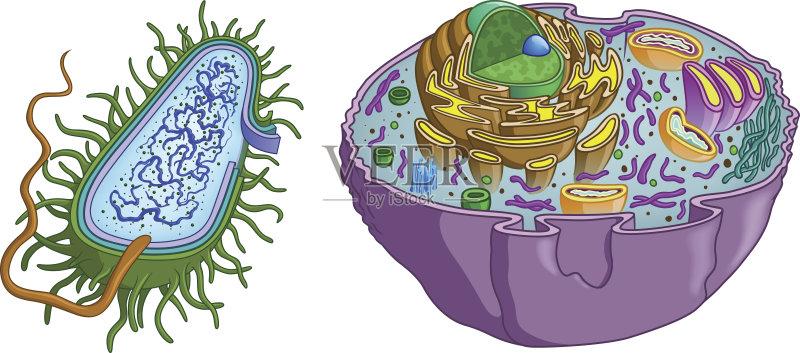 器 高尔基体 剪贴画 细胞质 图表 人体内脏器官 鞭毛 细胞骨架 微生物