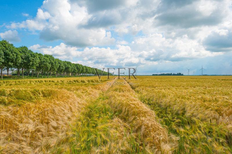田野-谷类 晴朗 植物 天空 自然 景观设计 农业 地形 云 草 福力沃兰 云景