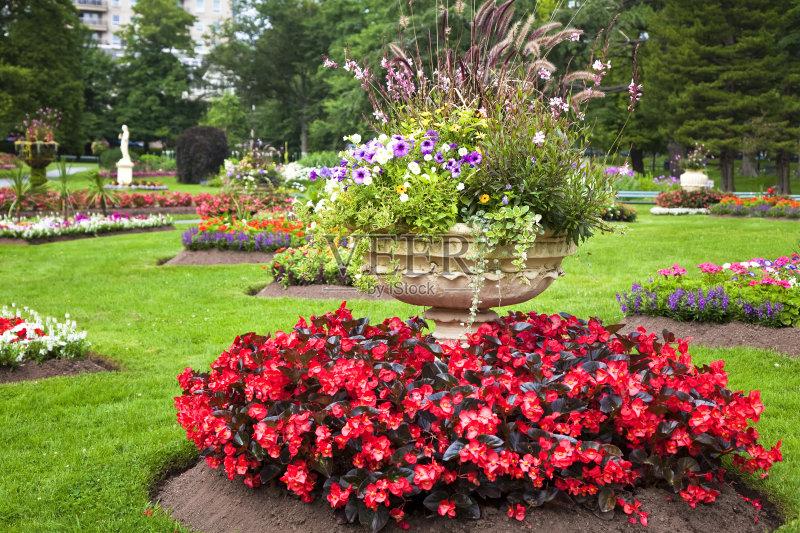 花园-花盆 灌木 叶子 植物 红色 花坛 容器 自然 天竺葵 水泥 草 草坪 半