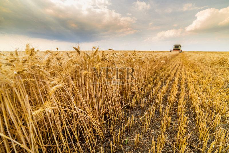 麦田-陆地 田地 谷类 田园风光 商业金融和工业 稻草 小麦 农场 夏天 裸