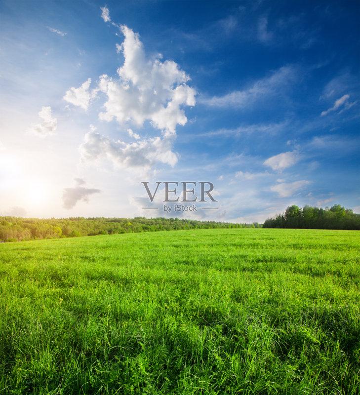 田野-草地 陆地 俄罗斯 环境 植物 天空 太阳 自然 黄色 平原 农业 地形