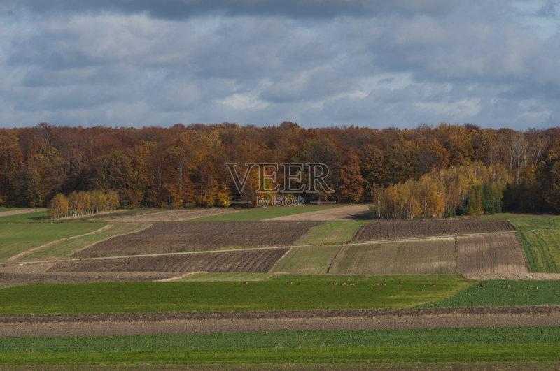 田野-泥土 秋天 陆地 生长 植物 陆用车 耕犁 职业 天空 自然 景观设计