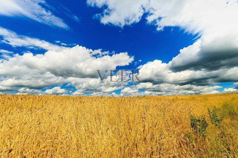 麦田-田地 无人 谷类 黄金 地形 云 小麦 金色 天空 户外