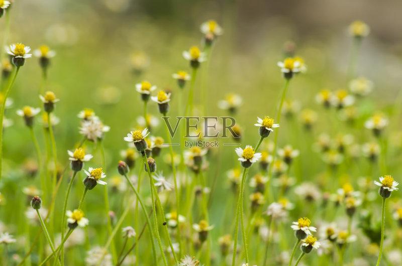 花草-草地 森林 叶子 彩色背景 夏天 自然 无人 黄色背景 风景 清新 草