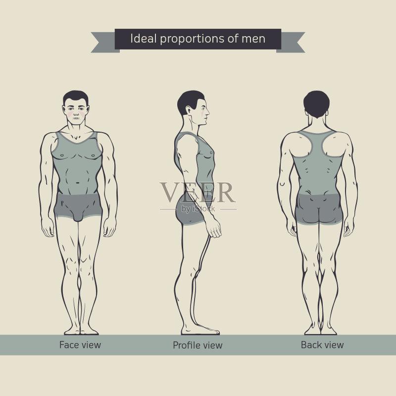 绘画插图 男性形象 比例 形状 生物医学插图 无人 人体结构 人体 人类形