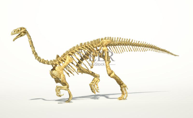 机制图 石头 剪贴画 石材 动物骨骼 古生物学 组织团队 绘画插图 步行