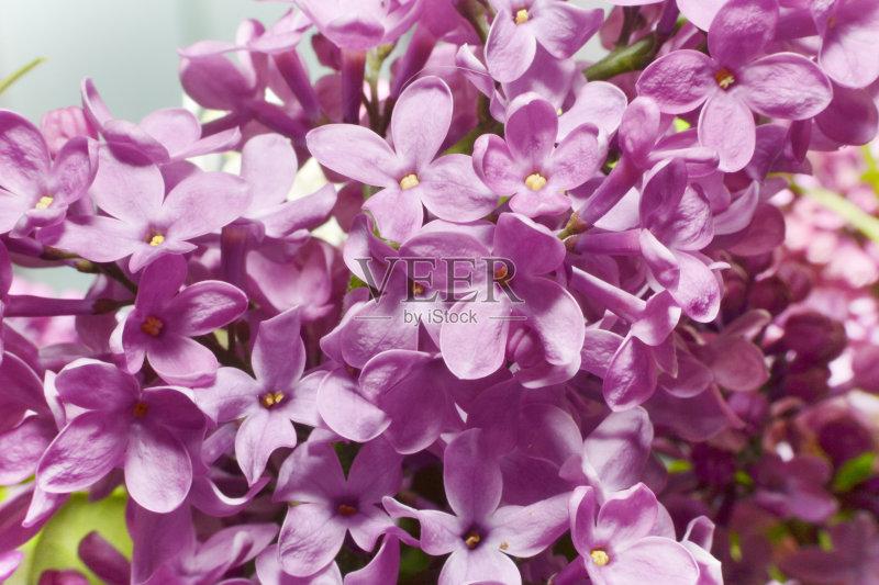 花卉-光 花 清新 花朵