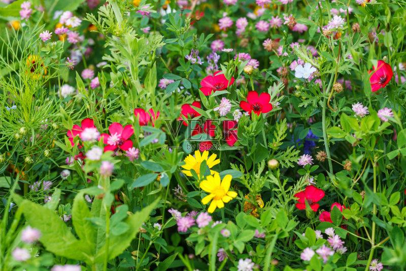 花草-草地 白色 植物 红色 花坛 式样 自然 黄色 装饰 季节 草 草坪 未经