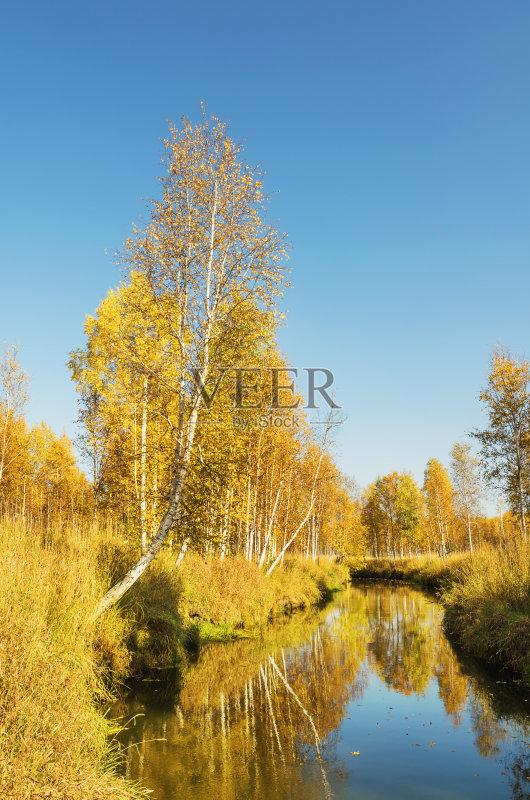 草 金色 背景 湖 户外 森林 田园风光 美 公园 橙色 蓝色图片