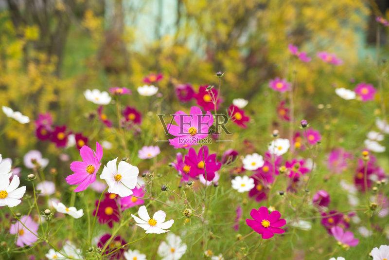 花卉-无人 绿色 清新 背景 夏天 自然 园林