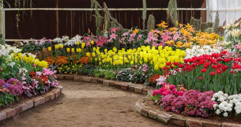 花园-花瓣 自然美 植物学 美 叶子 植物 春天 夏天 自然 黄色 无人 花 装