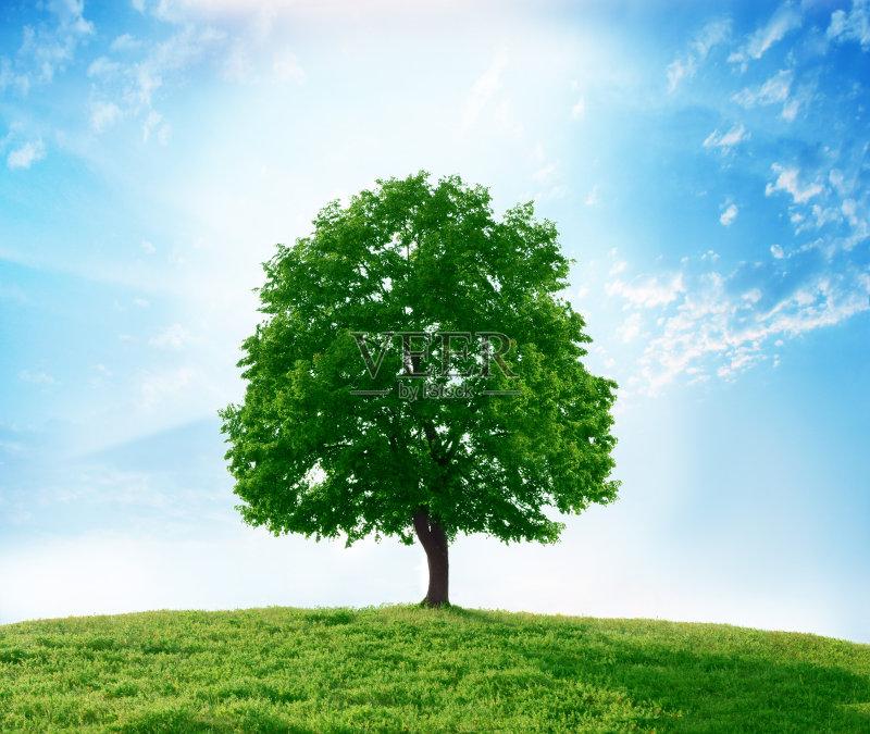 无人 小的 风景 清新 树 部分 草 户外图片