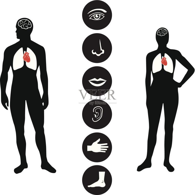 腹部 男性形象 人类肾脏 符号 手 人的耳朵 胃 骨骼 人的鼻子 人类形象