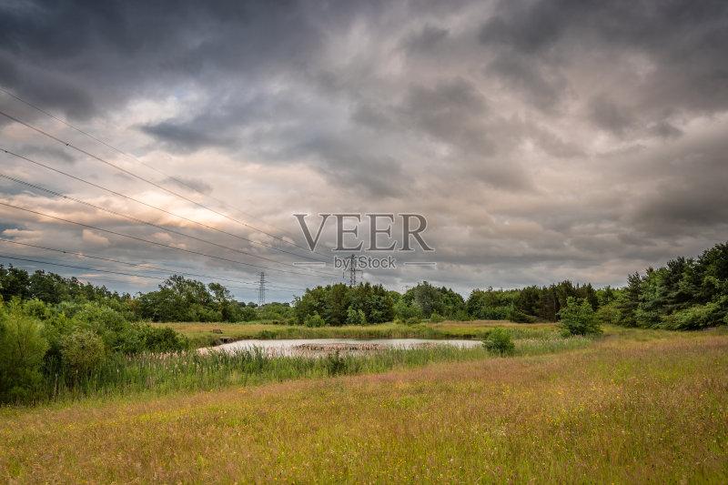 景-树林 芦苇 草地 工厂 环境 草原 植物 天空 自然 白昼 保护 英格兰 英图片