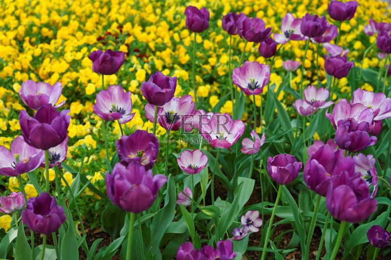 花卉- 花坛 菜园 鲜花盛开 国内著名景点 装饰 生活方式 床 地形 草 草坪 非