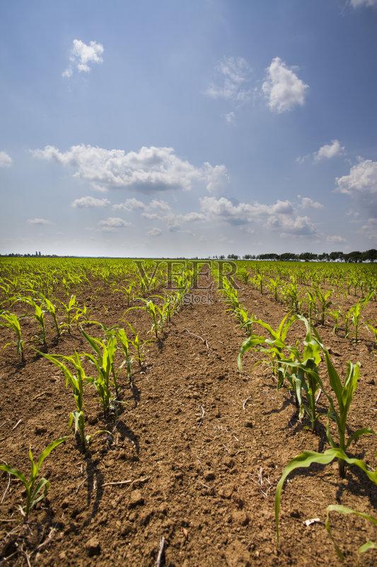 云景 户外 田地 自然美 已经垦殖的土地 地平面 绿色 田园风光 有机食