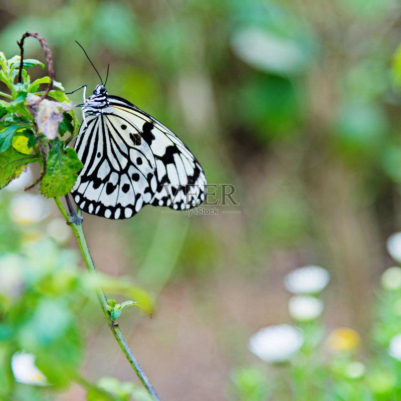 植物 花坛 纸风筝蝶 昆虫 自然 黄色 白昼 改变 脆弱 鳞翅类 野生动物