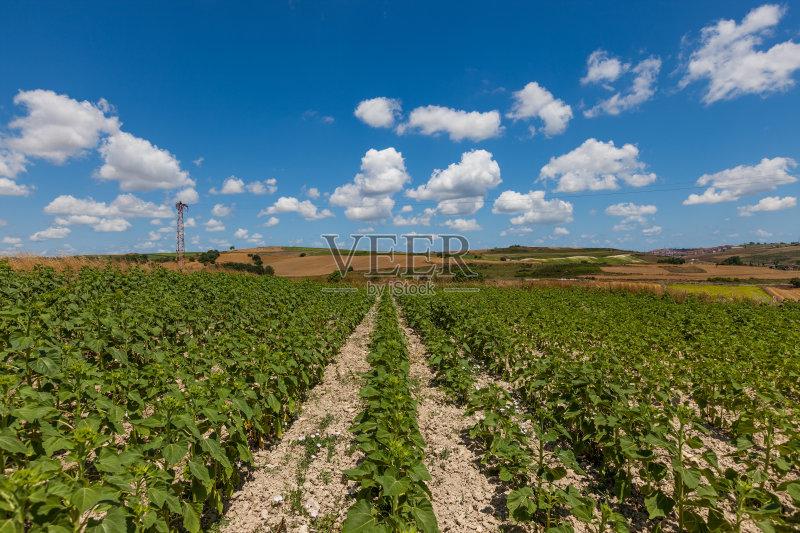 户外 花瓣 田地 自然美 已经垦殖的土地 地平面 绿色 田园风光