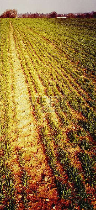 草 未经垦殖的土地 金色 空的 非都市风光 简单 户外 田地 田园风光