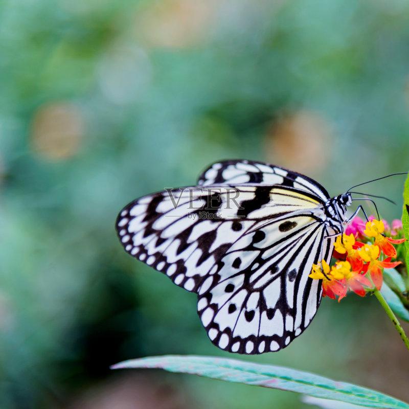 植物 花坛 Butterfly Garden 纸风筝蝶 昆虫 黄色 自然 白昼 改变 脆弱