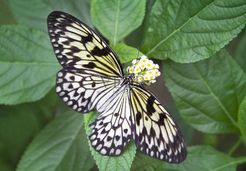 植物 式样 纸风筝蝶 昆虫 自然 黄色 完美 脆弱 鳞翅类 野生动物 花粉