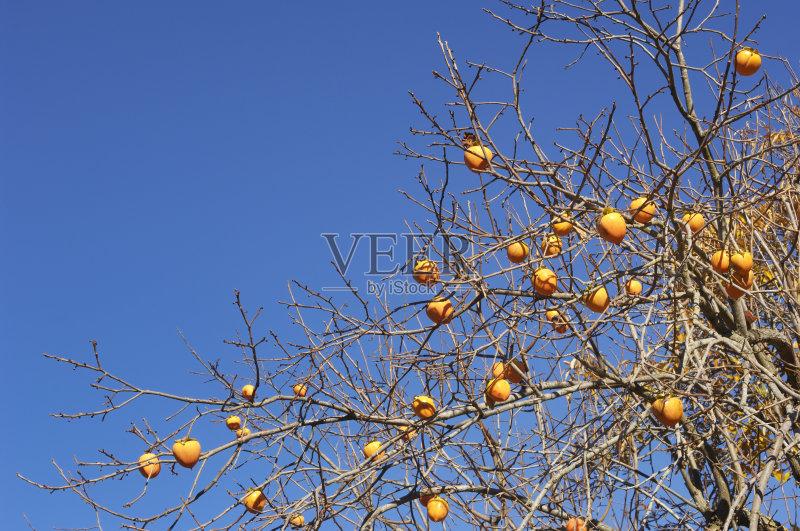 橙色 甜食 柿子树 农场 枝 农作物 白昼 无人 农业 生食 树 串 圆形 户外