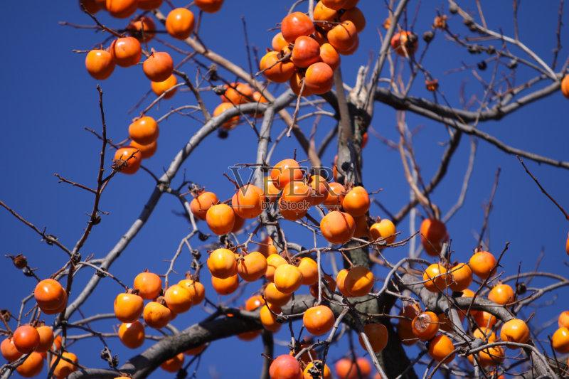 自然美 饮食 柿子树 甜食 自然 黄色 户外