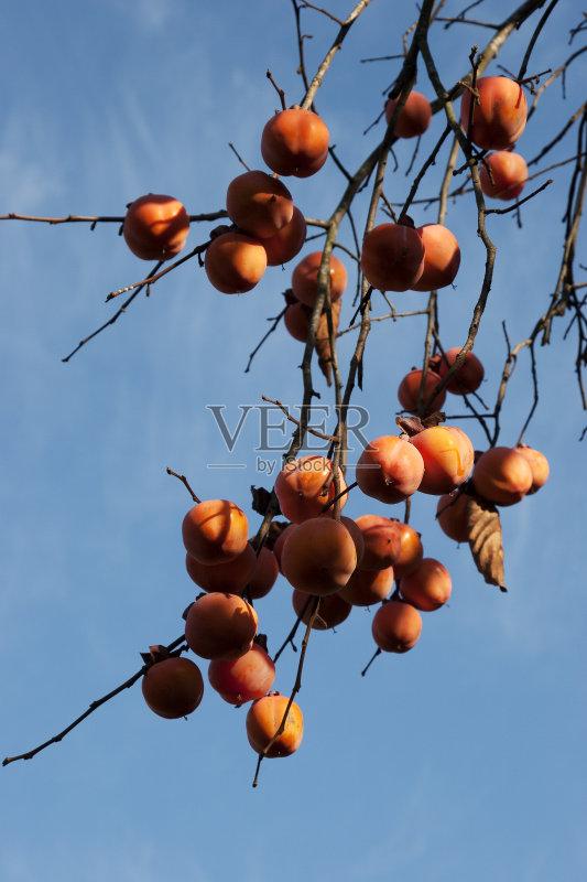 食品 多汁的 柿子树 健康生活方式 无人 2015年 热带气候 精神振作 清