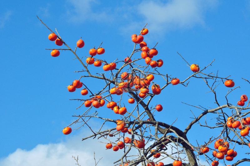 无人 食品 柿子树