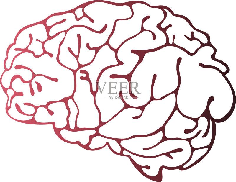 科学 智慧 计算机制图 剪贴画 人体内脏器官 歇斯底里 色彩渐变 知识