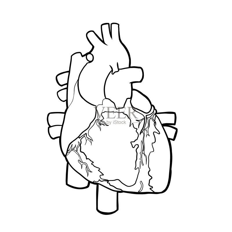 计算机制图 剪贴画 脉搏图 图表 生物学 人类心脏 绘画插图 发展 有序