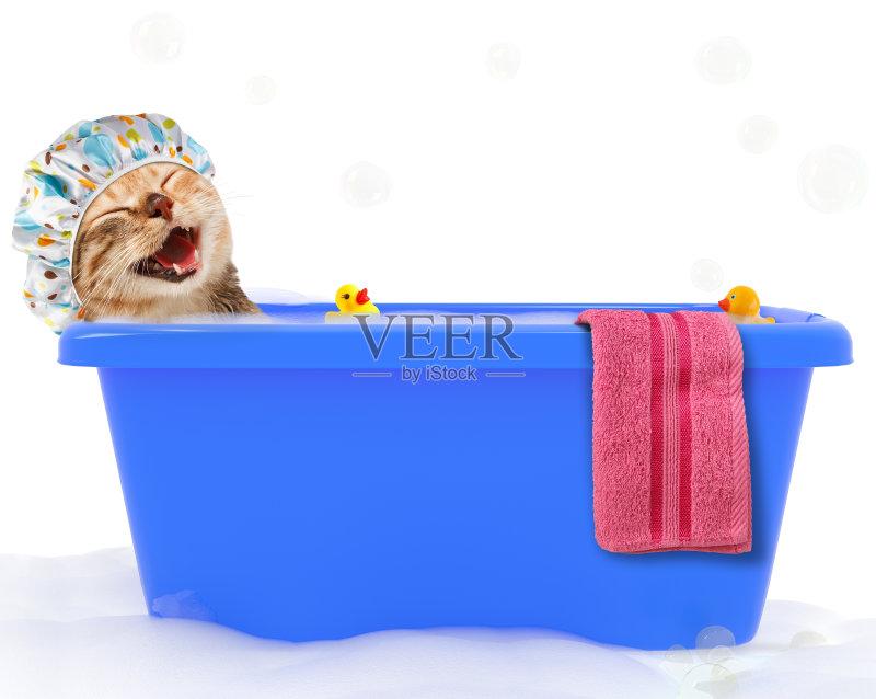 发型屋 肥皂 洗澡盆 卫生 宠物 美 波浪 蓝色 动物 动物躯体的组成部分 图片