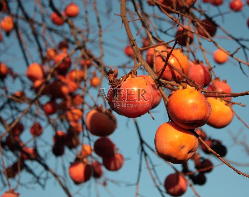 明亮 橙色 柿子树 抗氧化剂 枝 无人 熟的 食品 树 多色的 柿子树 瘦身